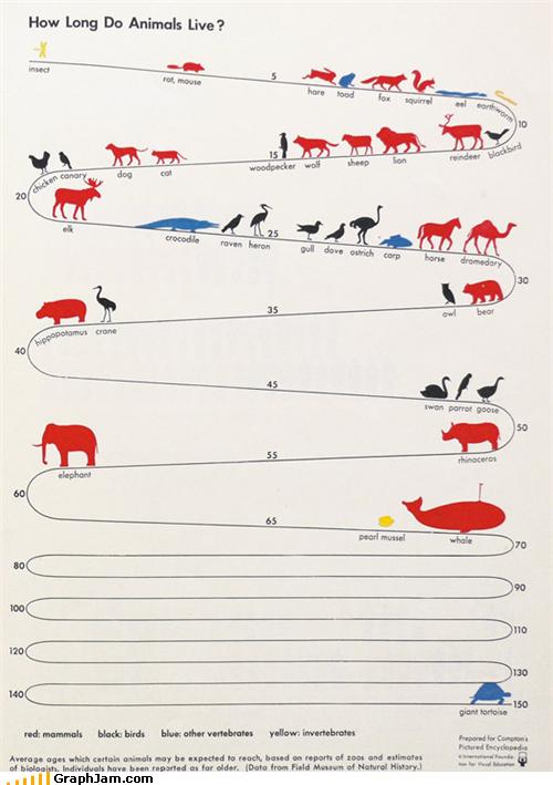 Infografik Lebenserwartung von Tierarten